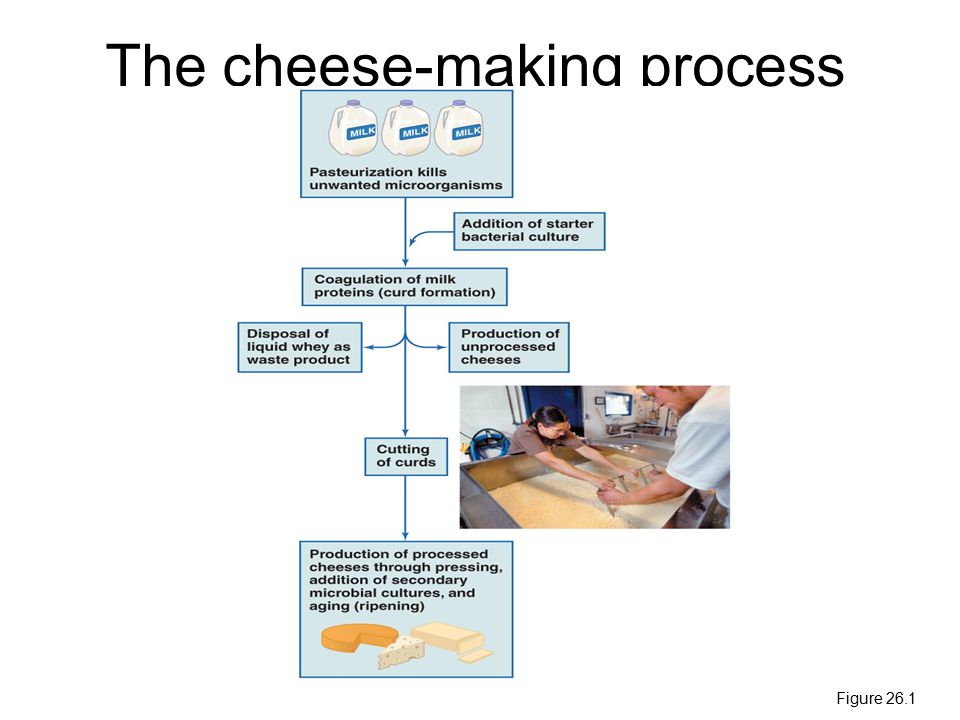 The cheese-making process Figure 26.1