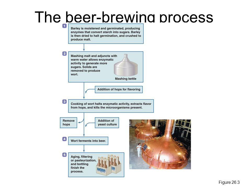 The beer-brewing process Figure 26.3