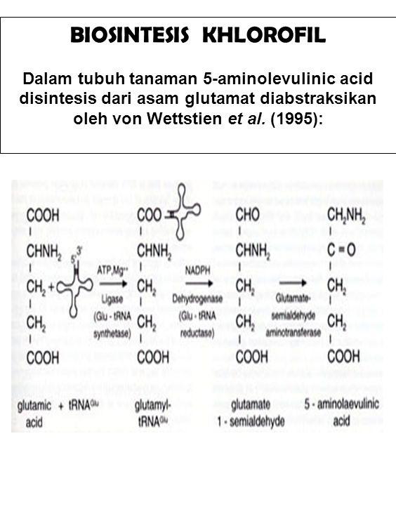 BIOSINTESIS KHLOROFIL Dalam tubuh tanaman 5-aminolevulinic acid disintesis dari asam glutamat diabstraksikan oleh von Wettstien et al. (1995):