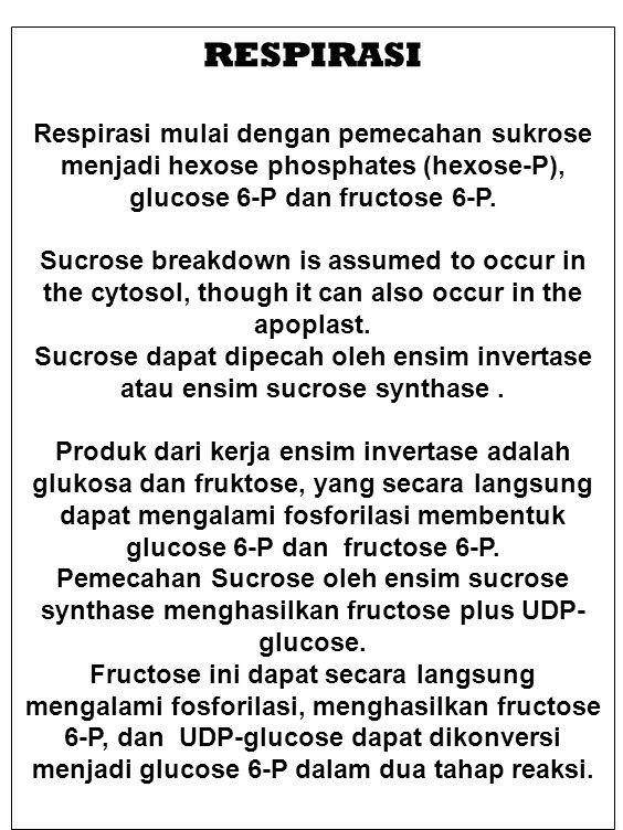 RESPIRASI Respirasi mulai dengan pemecahan sukrose menjadi hexose phosphates (hexose-P), glucose 6-P dan fructose 6-P. Sucrose breakdown is assumed to