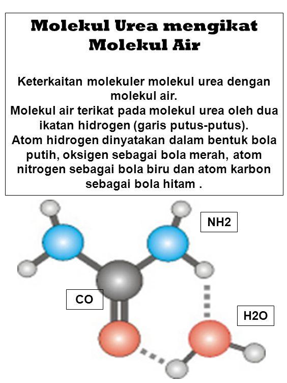 Molekul Urea mengikat Molekul Air Keterkaitan molekuler molekul urea dengan molekul air. Molekul air terikat pada molekul urea oleh dua ikatan hidroge