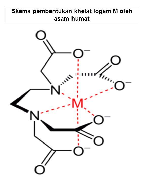 Skema pembentukan khelat logam M oleh asam humat