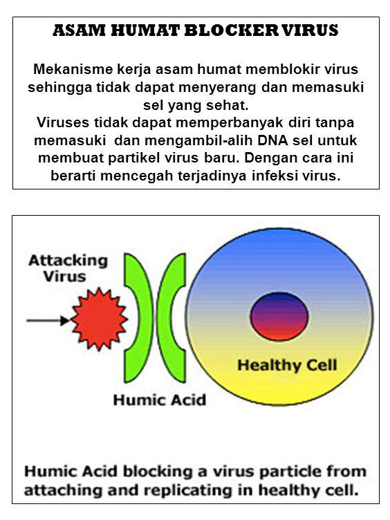 ASAM HUMAT BLOCKER VIRUS Mekanisme kerja asam humat memblokir virus sehingga tidak dapat menyerang dan memasuki sel yang sehat. Viruses tidak dapat me