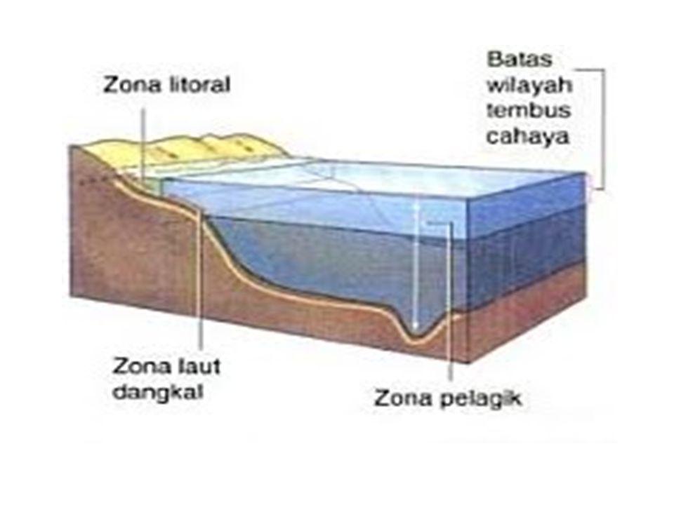 PELAGIC: Epipelagic: 0- 2 00 m Mesopelagic : 200 – 1000 m Bathypelagic: 1000 – 2000 m Abyssalpelagic 2000 – 6000 m Hedalpelagic: > 6000 m BENTHIC: Litoral: Intertidal Sublitoral: 0 – 200 m Bathyal : 200 – 2000 m Abyssal: 2000 – 6000 m Hadal > 6000 m STRUKTUR TOPOGRAFI DASAR LAUT, KEDALAMAN, KOLOM AIR DIATASNYA DAN EFEKTIVITAS SINAR MATAHARI