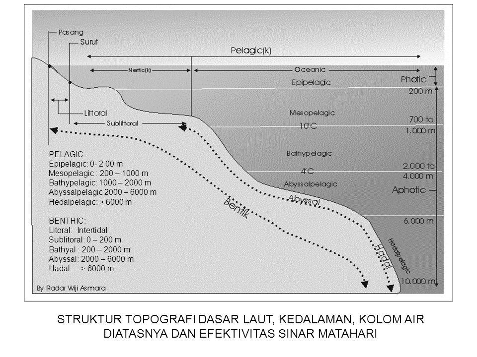 PELBAGAI ISTILAH COAST LINE (garis pantai) atau SHORELINE: Batas air laut terakhir mencapai darat dan bersifat dinamis tergantung pasang surut..