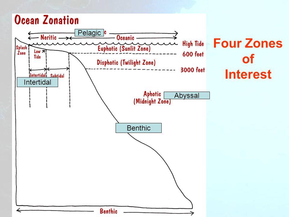 Epipelagik Dari permukaan (Mean Sea Level) hingga kedalaman 200 m (656 kaki).Mean Sea Level Mesopelagik Dari kedalaman 200 m turun ke 1.000 m (3.280 kaki).