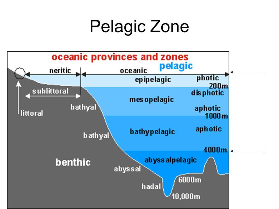 Inhabitants of the Pelagic Zone