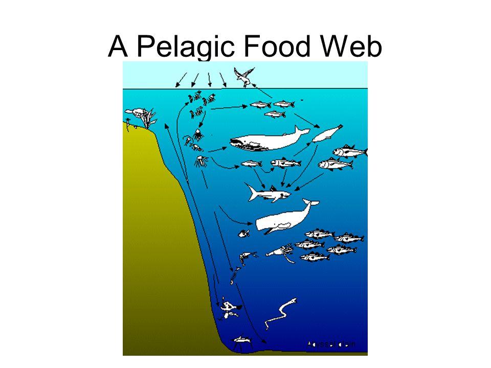 A Pelagic Food Web