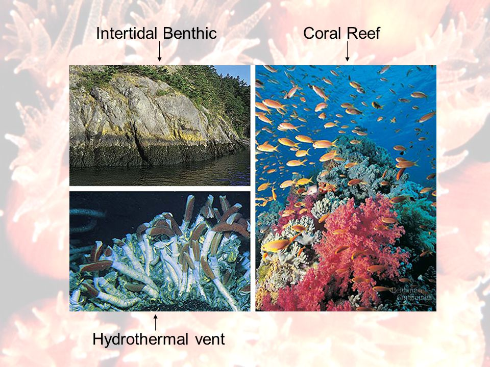 Intertidal Benthic Coral Reef Hydrothermal vent
