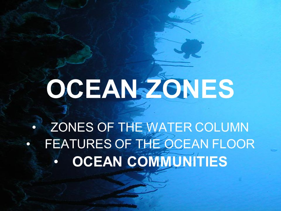 Ocean Biomes Can be divided by zones: intertidal, pelagic, and abyssal.