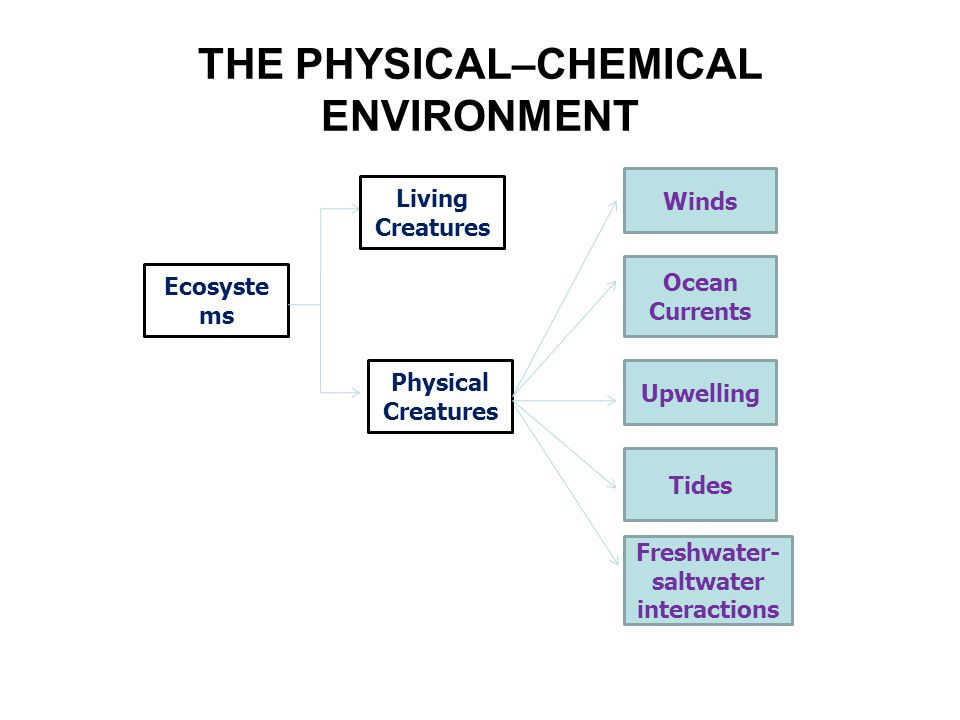 THE PHYSICAL–CHEMICAL ENVIRONMENT Ecosyste ms Living Creatures Physical Creatures Winds Ocean Currents Upwelling Tides Freshwater- saltwater interacti