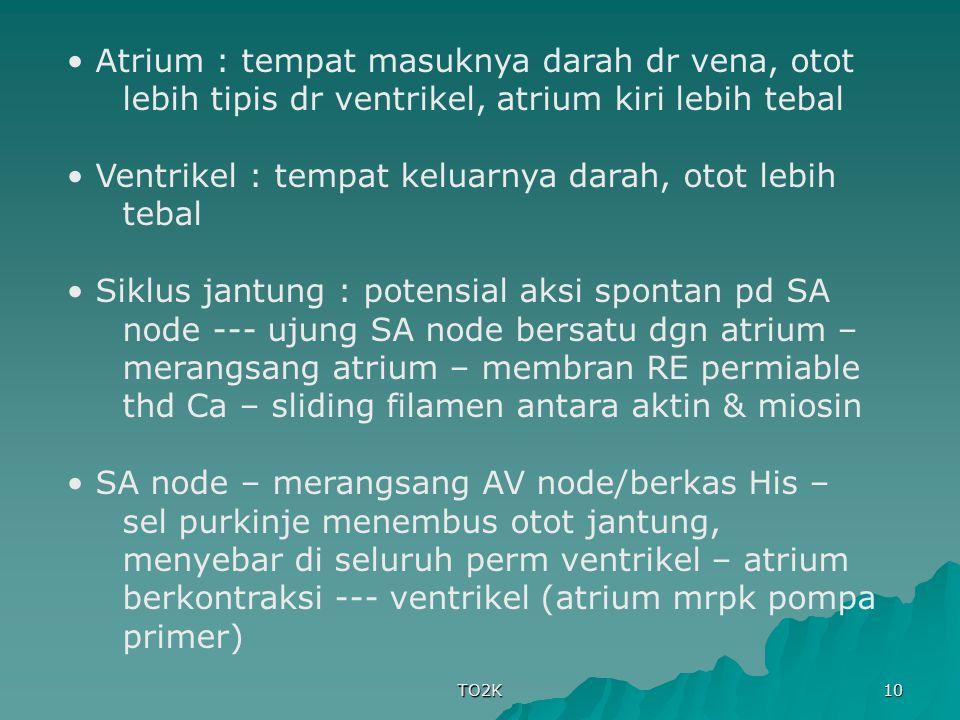 TO2K 10 Atrium : tempat masuknya darah dr vena, otot lebih tipis dr ventrikel, atrium kiri lebih tebal Ventrikel : tempat keluarnya darah, otot lebih