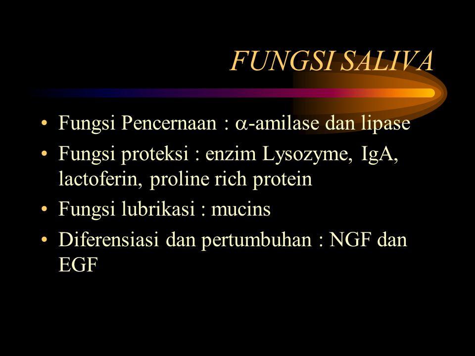 FUNGSI SALIVA Fungsi Pencernaan :  -amilase dan lipase Fungsi proteksi : enzim Lysozyme, IgA, lactoferin, proline rich protein Fungsi lubrikasi : muc