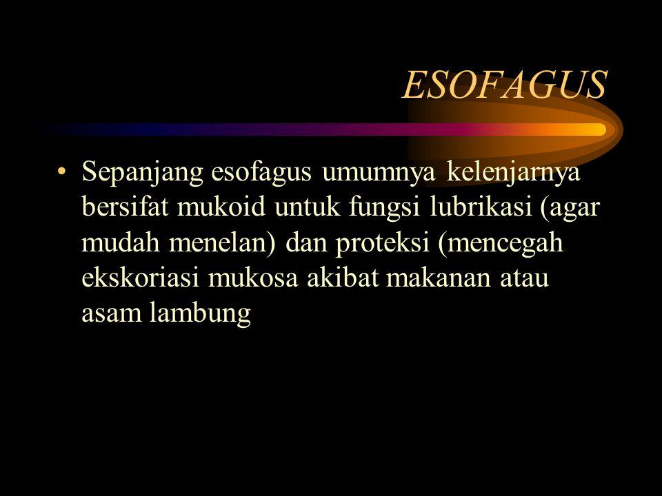 ESOFAGUS Sepanjang esofagus umumnya kelenjarnya bersifat mukoid untuk fungsi lubrikasi (agar mudah menelan) dan proteksi (mencegah ekskoriasi mukosa a