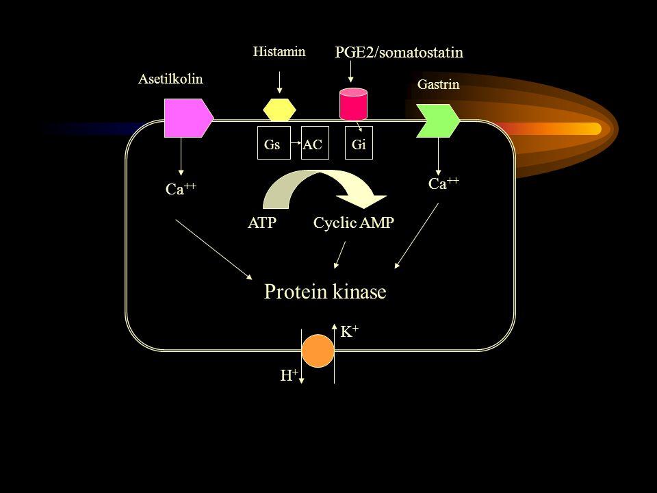 Ca ++ Asetilkolin Histamin PGE2/somatostatin Gastrin GsACGi Ca ++ ATPCyclic AMP Protein kinase H+H+ K+K+
