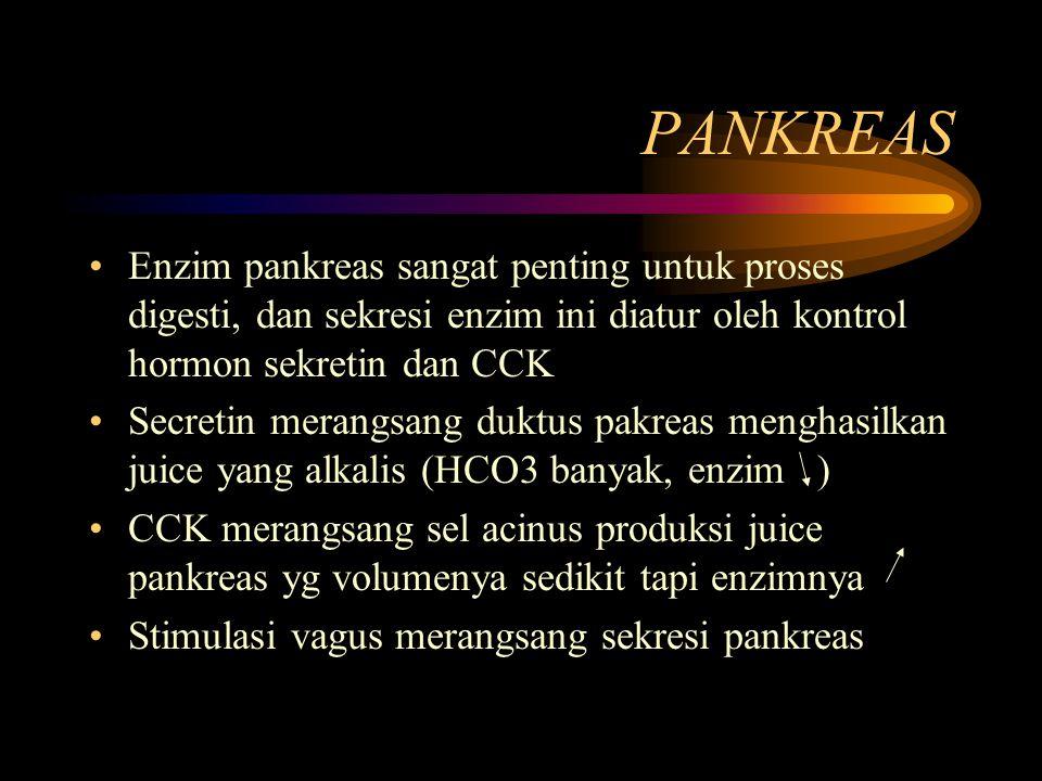 PANKREAS Enzim pankreas sangat penting untuk proses digesti, dan sekresi enzim ini diatur oleh kontrol hormon sekretin dan CCK Secretin merangsang duk