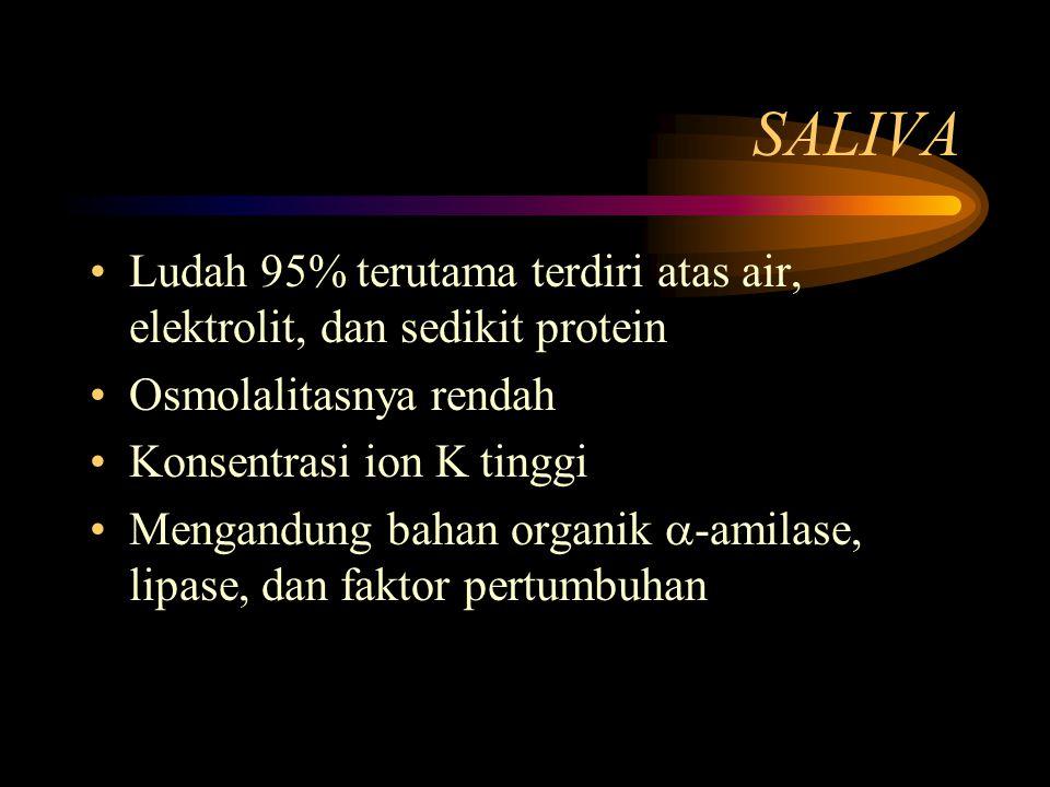 SALIVA Ludah 95% terutama terdiri atas air, elektrolit, dan sedikit protein Osmolalitasnya rendah Konsentrasi ion K tinggi Mengandung bahan organik 