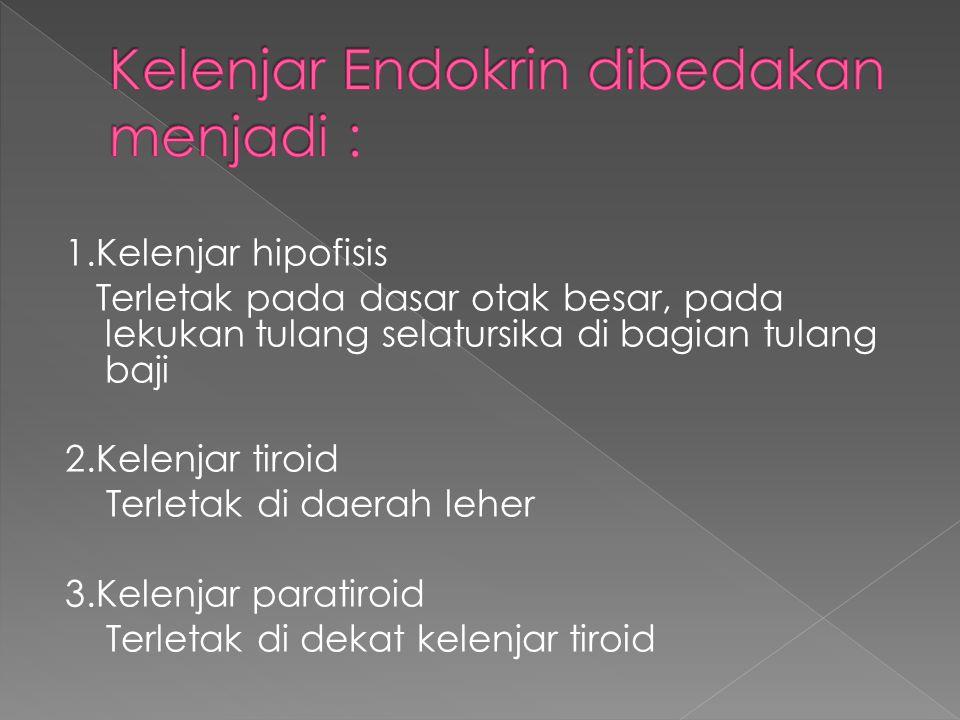 1.Kelenjar hipofisis Terletak pada dasar otak besar, pada lekukan tulang selatursika di bagian tulang baji 2.Kelenjar tiroid Terletak di daerah leher