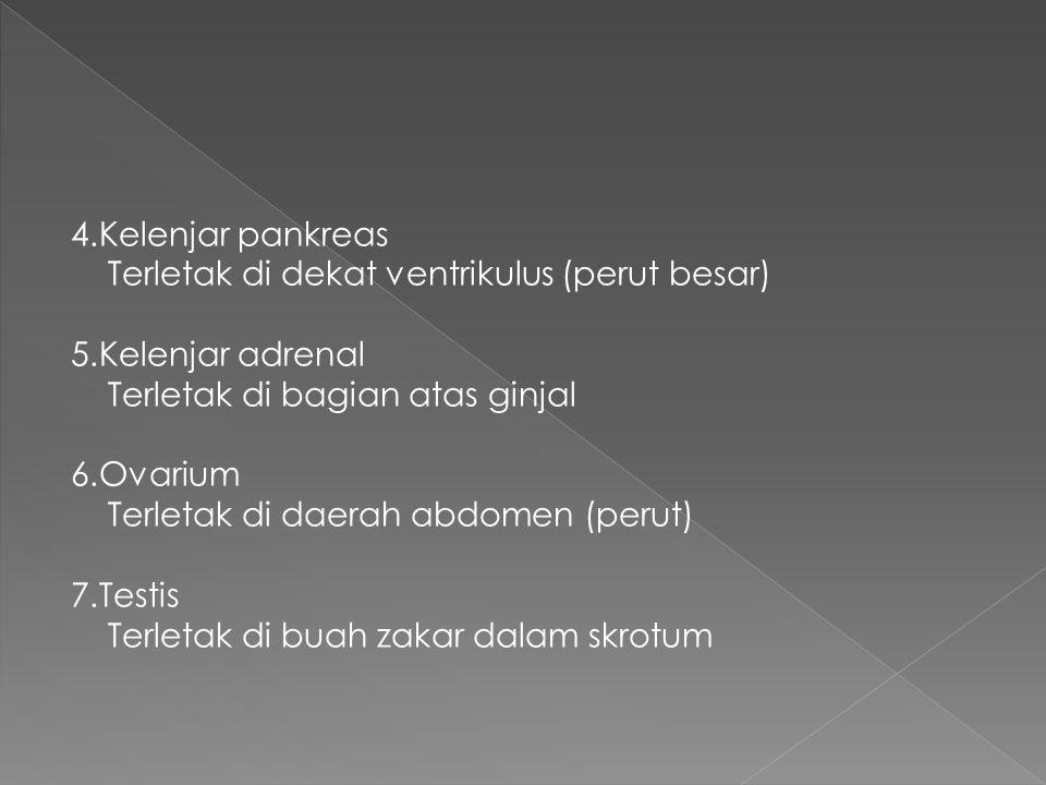 4.Kelenjar pankreas Terletak di dekat ventrikulus (perut besar) 5.Kelenjar adrenal Terletak di bagian atas ginjal 6.Ovarium Terletak di daerah abdomen