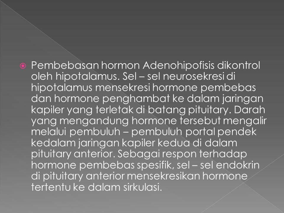  Pembebasan hormon Adenohipofisis dikontrol oleh hipotalamus. Sel – sel neurosekresi di hipotalamus mensekresi hormone pembebas dan hormone penghamba
