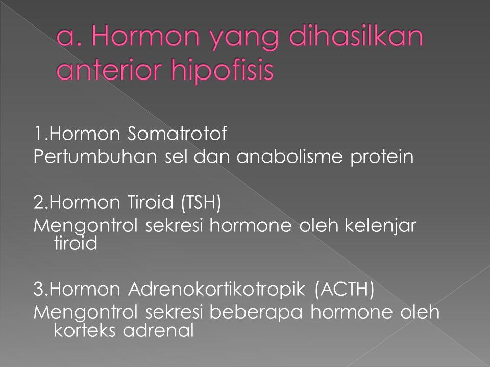1.Hormon Somatrotof Pertumbuhan sel dan anabolisme protein 2.Hormon Tiroid (TSH) Mengontrol sekresi hormone oleh kelenjar tiroid 3.Hormon Adrenokortikotropik (ACTH) Mengontrol sekresi beberapa hormone oleh korteks adrenal