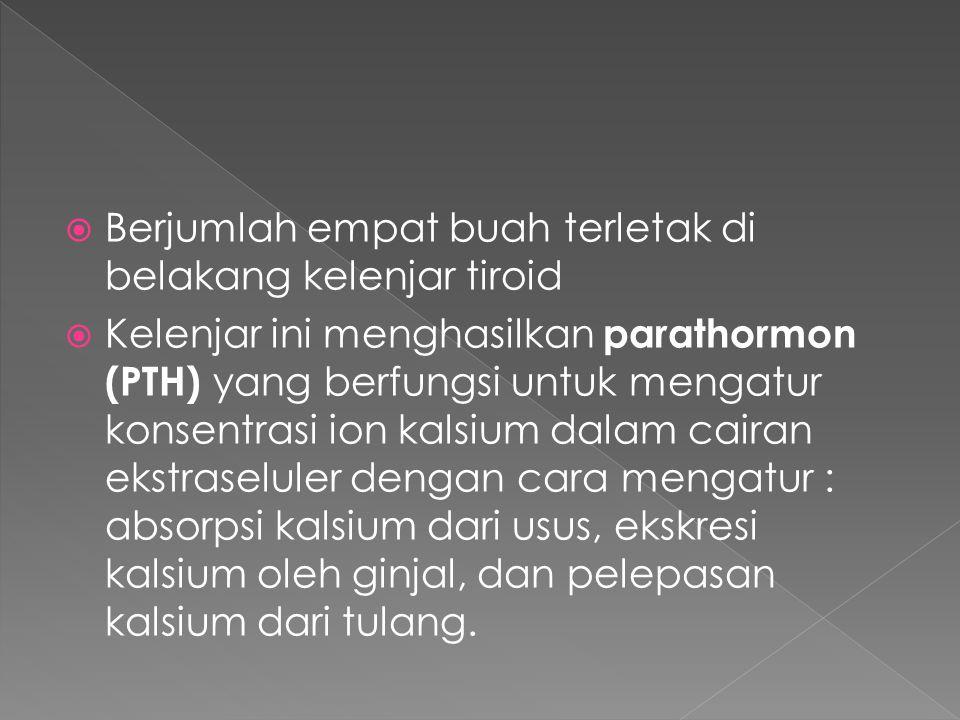  Berjumlah empat buah terletak di belakang kelenjar tiroid  Kelenjar ini menghasilkan parathormon (PTH) yang berfungsi untuk mengatur konsentrasi ion kalsium dalam cairan ekstraseluler dengan cara mengatur : absorpsi kalsium dari usus, ekskresi kalsium oleh ginjal, dan pelepasan kalsium dari tulang.