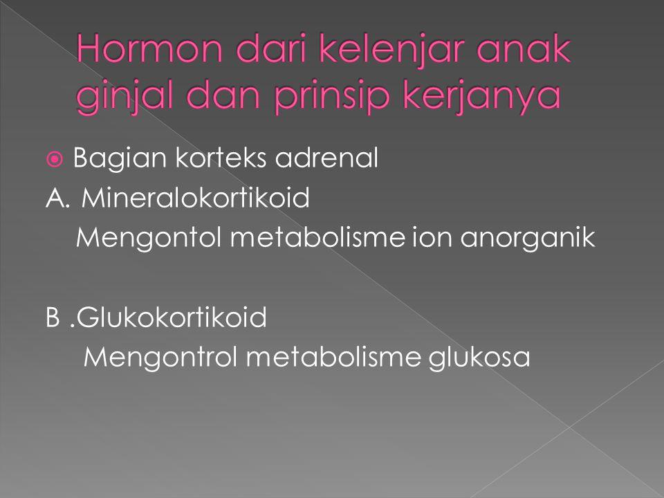  Bagian korteks adrenal A. Mineralokortikoid Mengontol metabolisme ion anorganik B.Glukokortikoid Mengontrol metabolisme glukosa