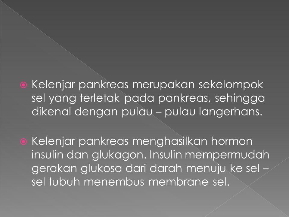  Kelenjar pankreas merupakan sekelompok sel yang terletak pada pankreas, sehingga dikenal dengan pulau – pulau langerhans.  Kelenjar pankreas mengha