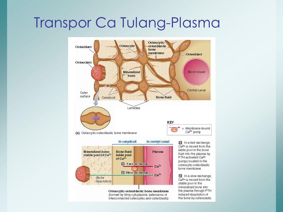 Transpor Ca Tulang-Plasma