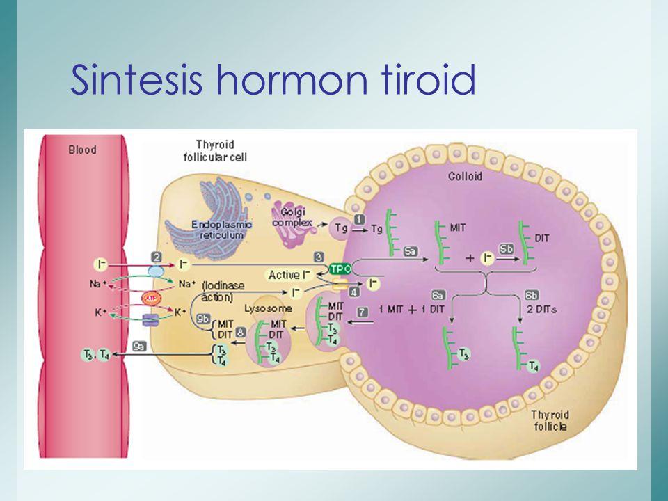 Sintesis hormon tiroid