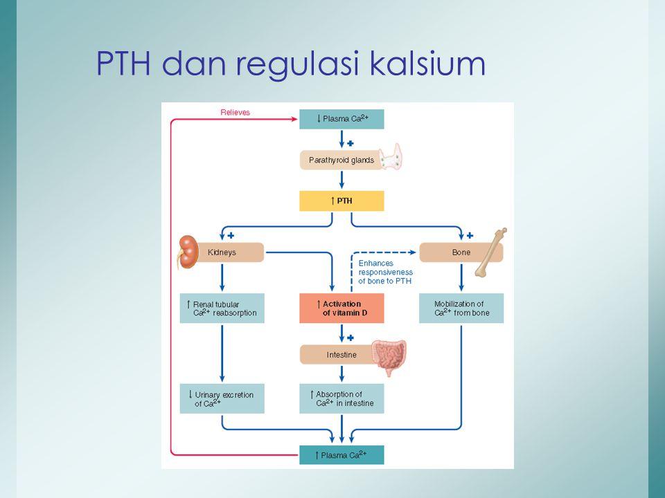 PTH dan regulasi kalsium