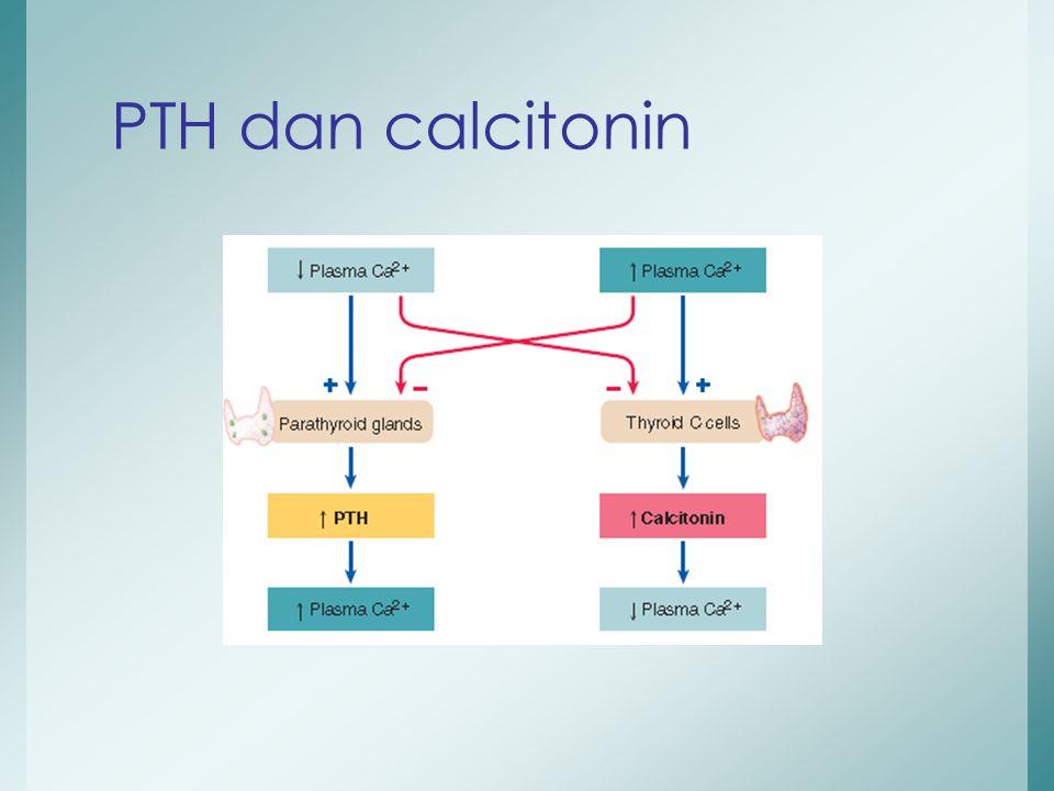 PTH dan calcitonin