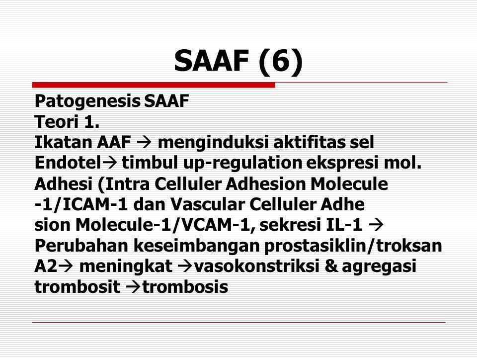 SAAF (6) Patogenesis SAAF Teori 1. Ikatan AAF  menginduksi aktifitas sel Endotel  timbul up-regulation ekspresi mol. Adhesi (Intra Celluler Adhesion