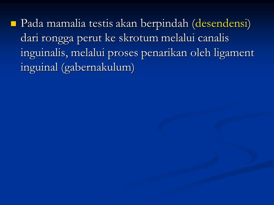 Pada mamalia testis akan berpindah (desendensi) dari rongga perut ke skrotum melalui canalis inguinalis, melalui proses penarikan oleh ligament inguin
