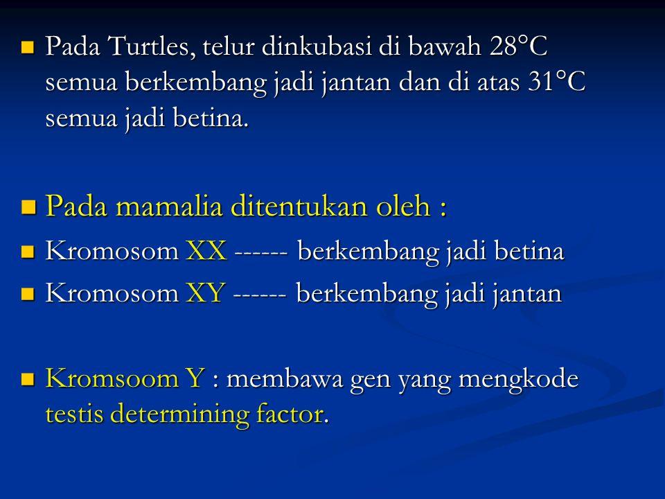 Pada Turtles, telur dinkubasi di bawah 28°C semua berkembang jadi jantan dan di atas 31°C semua jadi betina. Pada Turtles, telur dinkubasi di bawah 28