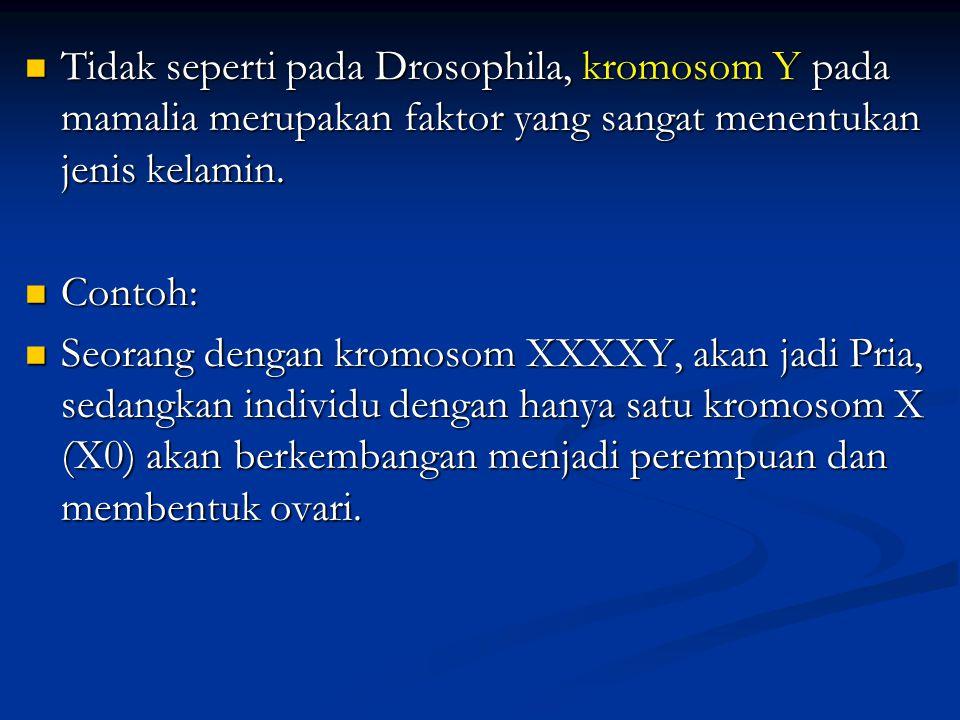 3.SRY dan SOX 9 : merubah bipotential gonad berkembang menjadi jantan (testis) 4.