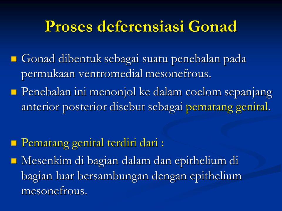 Proses deferensiasi Gonad Gonad dibentuk sebagai suatu penebalan pada permukaan ventromedial mesonefrous. Gonad dibentuk sebagai suatu penebalan pada