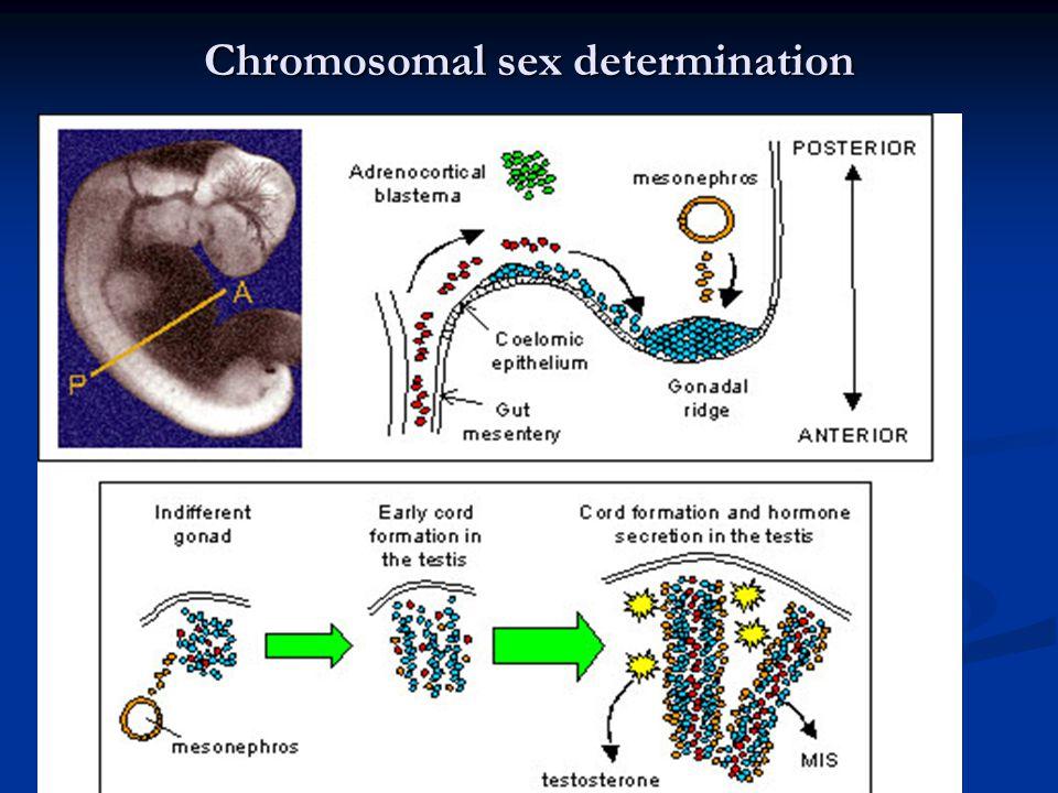 Skema Peran Beberapa Gen dalam Perkembangan Organ Kelamin