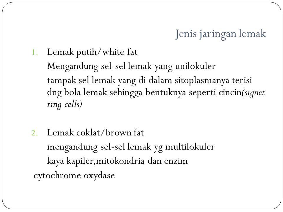 Jenis jaringan lemak 1. Lemak putih/white fat Mengandung sel-sel lemak yang unilokuler tampak sel lemak yang di dalam sitoplasmanya terisi dng bola le