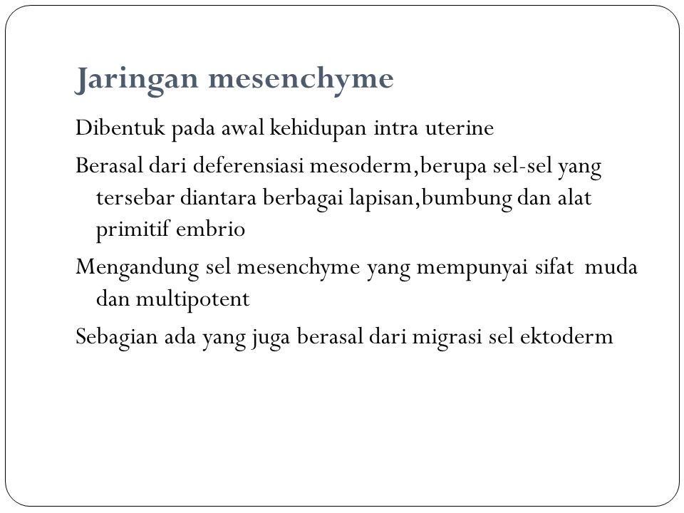 Jaringan mesenchyme Dibentuk pada awal kehidupan intra uterine Berasal dari deferensiasi mesoderm,berupa sel-sel yang tersebar diantara berbagai lapis