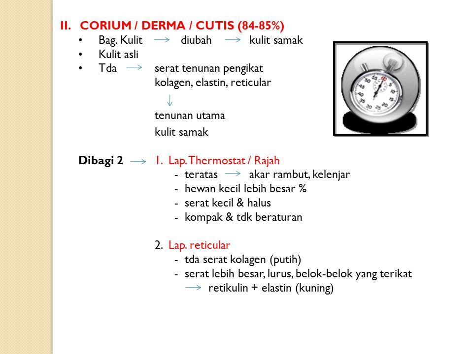 4.Lap. Tembus cahaya / str lucidum - lapisan yang terang - acidophil - sel-sel tidak berinti 5.Lap. Tanduk / str Kornium - sel-sel yang pipih - sel-se