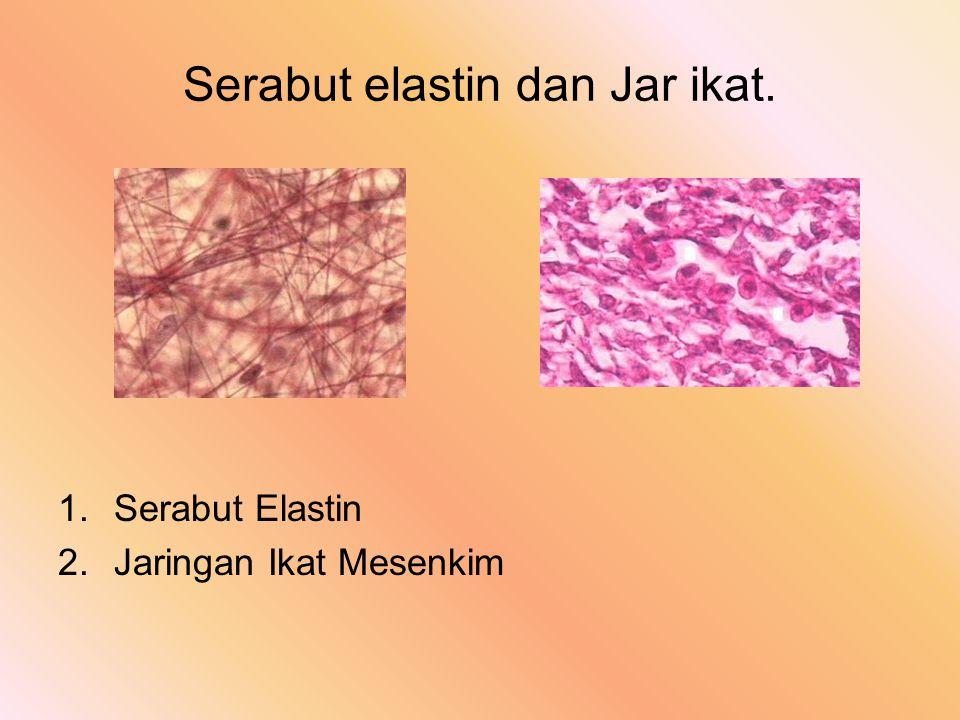 2.Glandula Tubuler a). Merokrimon - bag. Sekretoriknya tdpt tabung sempit - tdk sama, tergulung (gl. Globiformis) - bentuk sel kuboidkolumnersekresi b