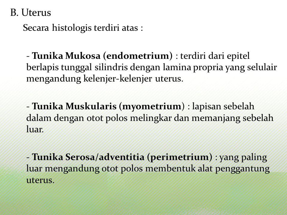 B. Uterus Secara histologis terdiri atas : - Tunika Mukosa (endometrium) : terdiri dari epitel berlapis tunggal silindris dengan lamina propria yang s