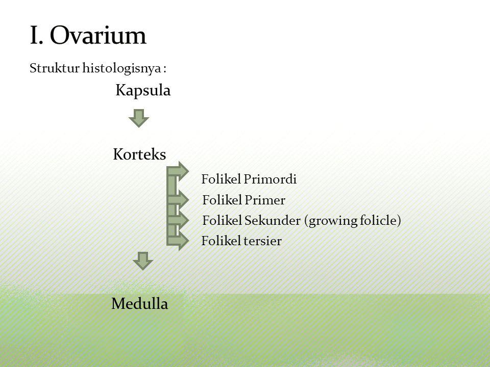 Struktur histologisnya : Kapsula Korteks Folikel Primordi Folikel Primer Folikel Sekunder (growing folicle) Folikel tersier Medulla