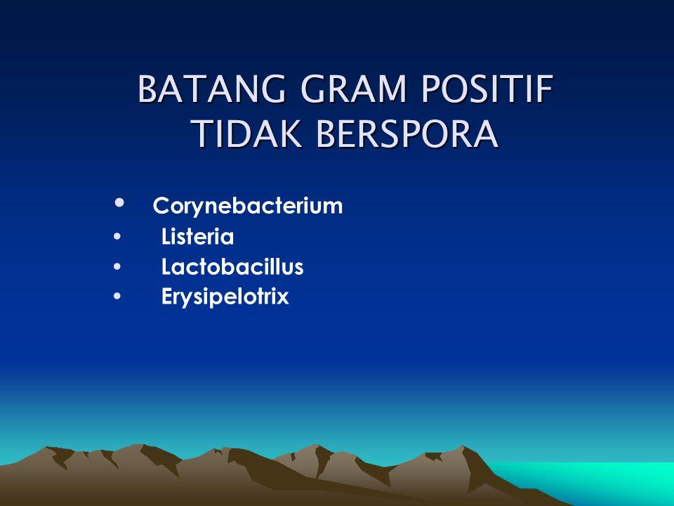 Corynebacterium Morfologi: batang langsing metachromatic granule Katalase positif 1.