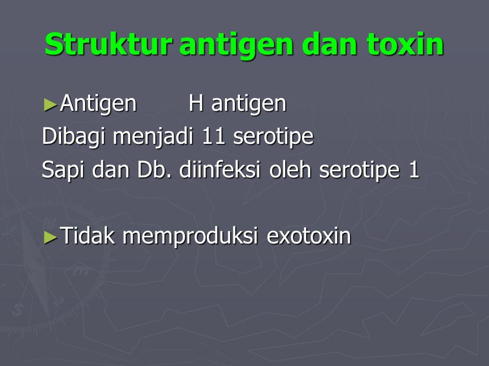 Struktur antigen dan toxin ► AntigenH antigen Dibagi menjadi 11 serotipe Sapi dan Db. diinfeksi oleh serotipe 1 ► Tidak memproduksi exotoxin