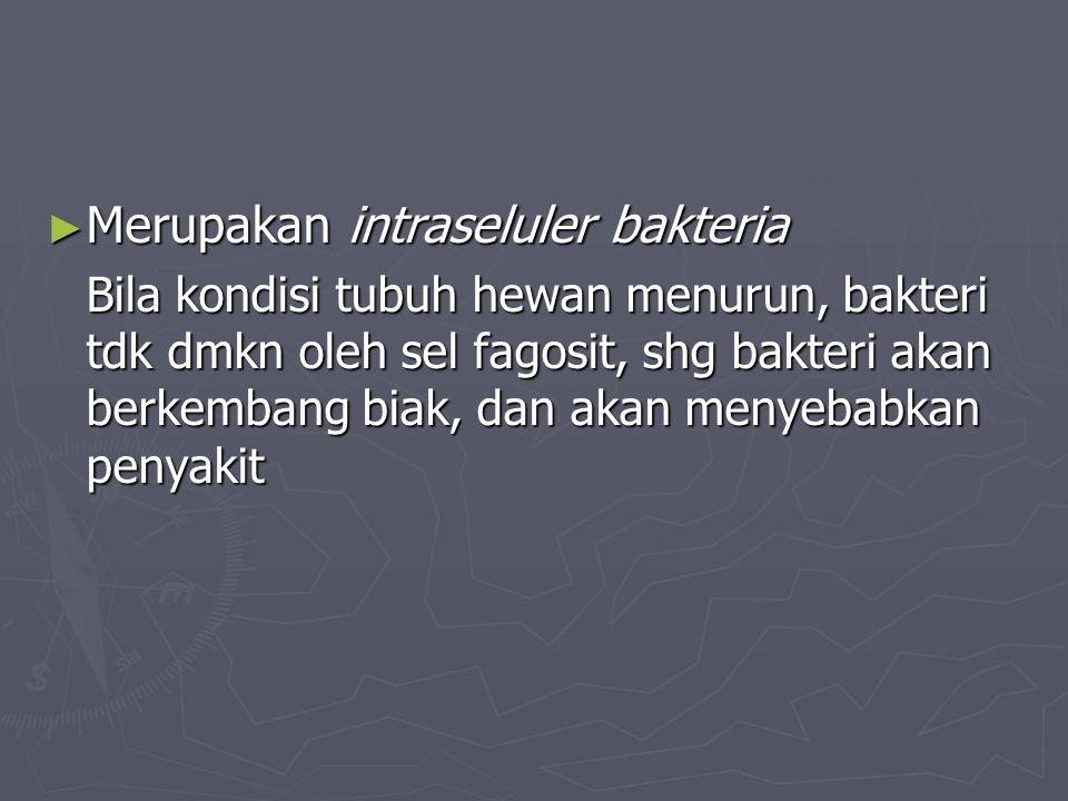 ► Merupakan intraseluler bakteria Bila kondisi tubuh hewan menurun, bakteri tdk dmkn oleh sel fagosit, shg bakteri akan berkembang biak, dan akan meny