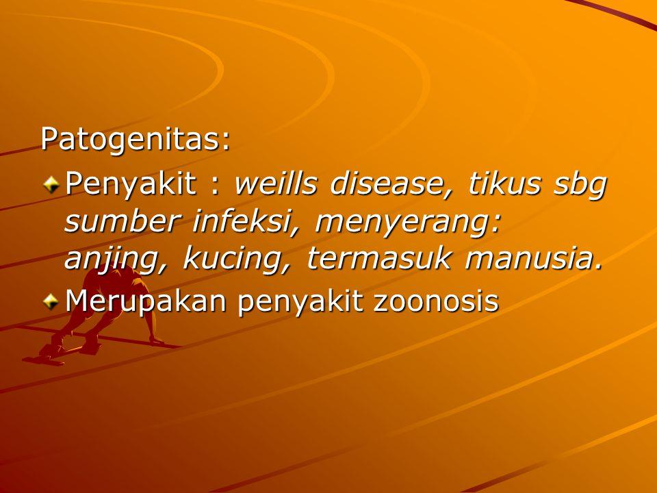 Patogenitas: Penyakit : weills disease, tikus sbg sumber infeksi, menyerang: anjing, kucing, termasuk manusia. Merupakan penyakit zoonosis