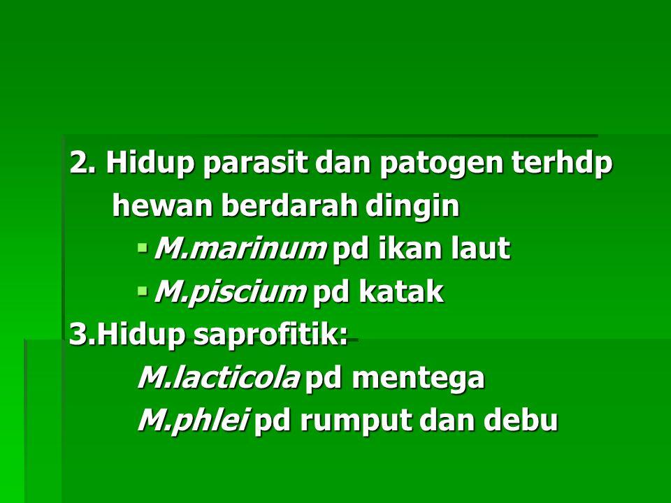 2. Hidup parasit dan patogen terhdp hewan berdarah dingin hewan berdarah dingin  M.marinum pd ikan laut  M.piscium pd katak 3.Hidup saprofitik: M.la