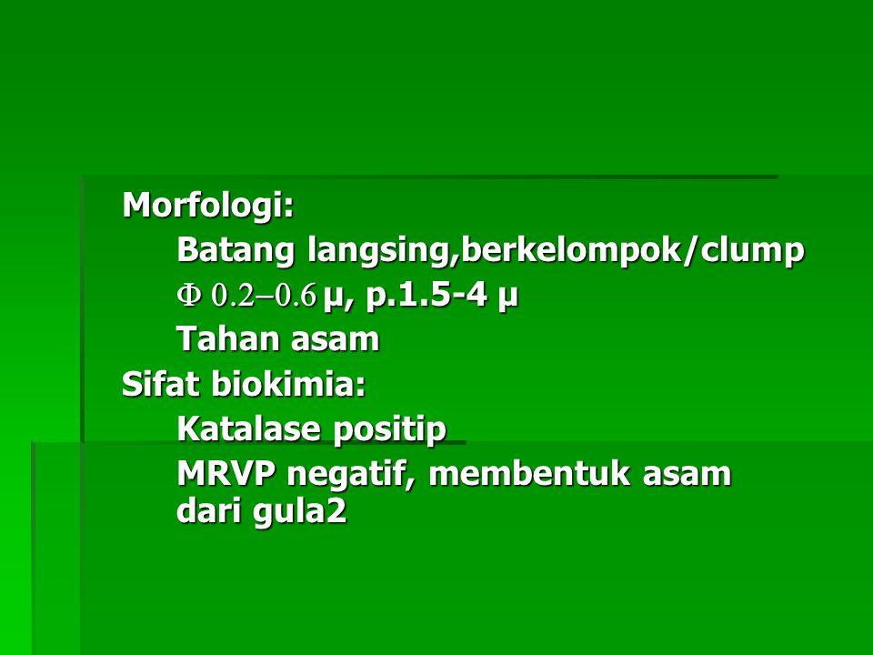 Morfologi: Batang langsing,berkelompok/clump  µ, p.1.5-4 µ  µ, p.1.5-4 µ Tahan asam Sifat biokimia: Katalase positip MRVP negatif,
